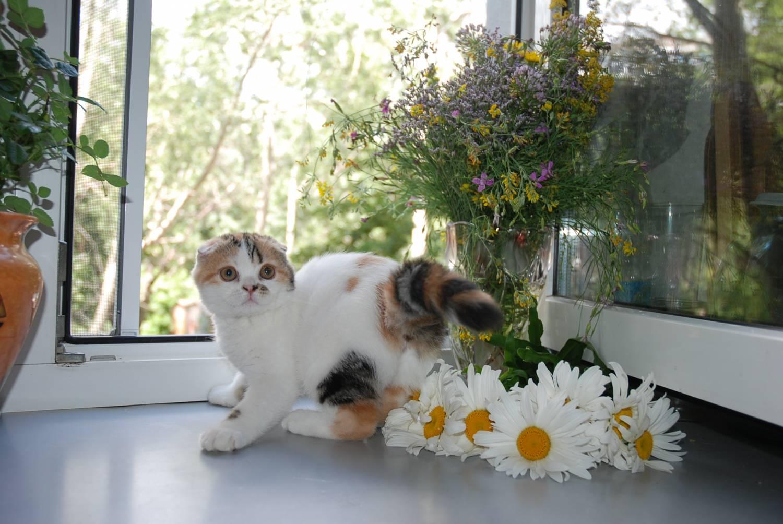 Цветок отпугивающий кошек